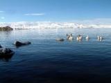 Çıldır Gölü'nde martıların yavrulama dönemi